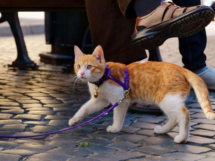 Кот боится улицы