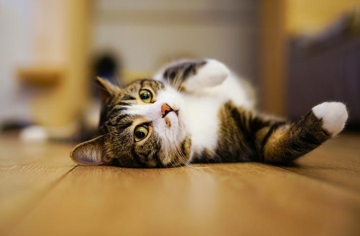 Почему кошкам нравится запах хлорки