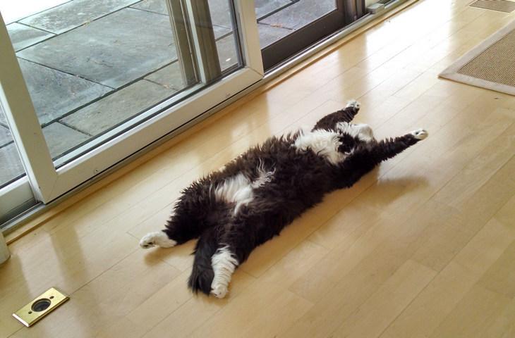 Почему кошки любят запах хлорки